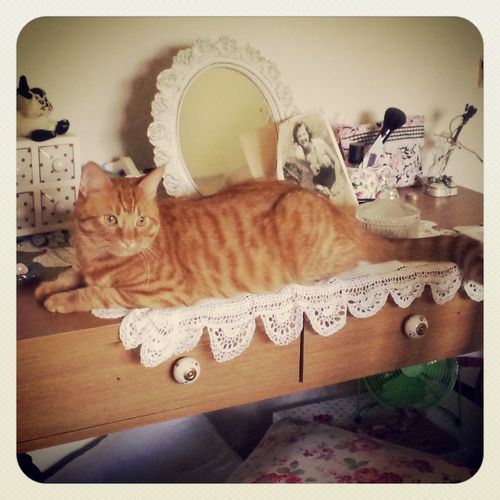 Perfect addition to my dressing table / desk. ;) Eye4photography  Cat Watching EyeEm Best Shots Hamish