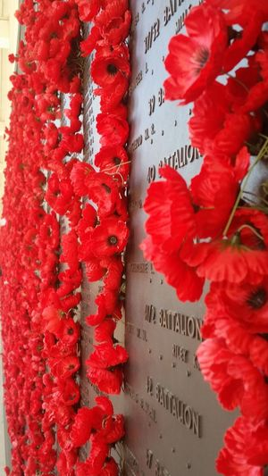 Canberra Warmemorial Australia Poppy Flowers Rembering Loved Ones War Weekend Activities LEST WE FORGET The ANZACS Remberence Militarylife Taking Photos Hanging Out Hello World Eye Em Best Shots Eyeem Photography Streamzoofriends Streamzoofamily