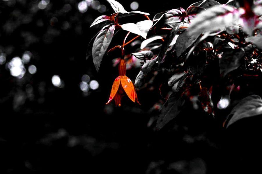 Decolorizer Natural Beauty Flora Macro_collection