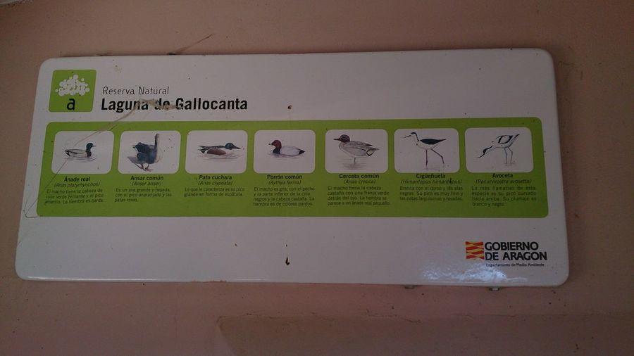 Las Distintas clases de Aves que hay en la Laguna De Gallocanta