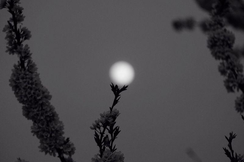 Monochrome Walking Around Photography EyeEm Best Shots Snapshots Of Life Fujifilm Getting Inspired Eye4photography  Japan Taking Photos Nature Landscape Blackandwhite Wood View EyeEm Nature Lover Night Moon Moonlight