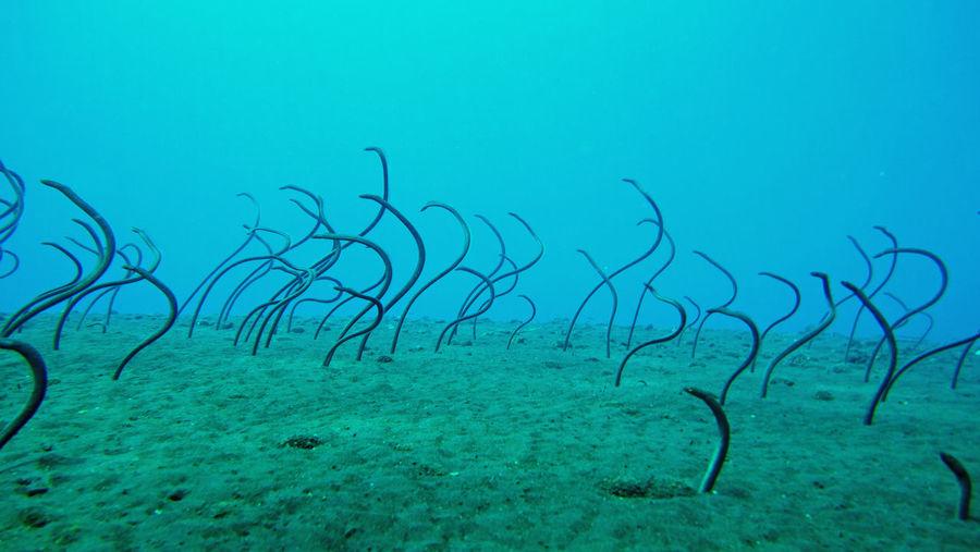 Eels swimming in sea