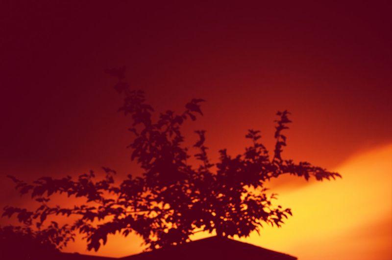 Moon Light Night Photography Night Sky