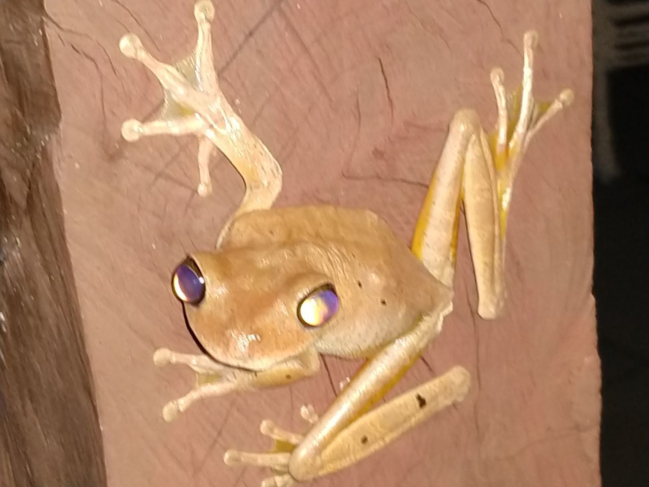 CLOSE-UP OF LIZARD ON WALL
