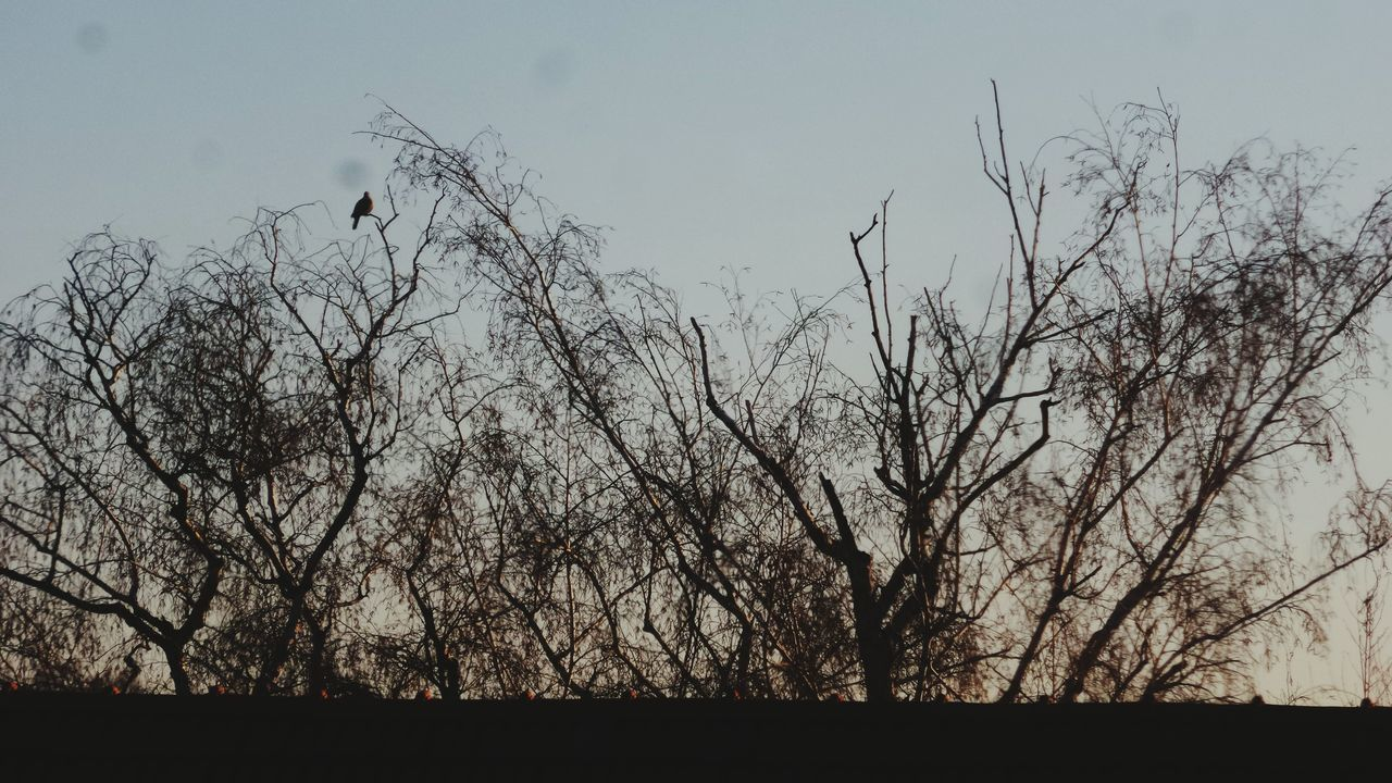 silhouette, nature, tree, bare tree, no people, sky, outdoors, beauty in nature, branch, clear sky, day