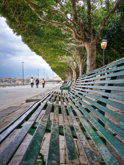 A Matter Of Perspective Siracusa Sicily Italy Travel Photography Travel Voyage Traveling Mobile Photography Fine Art Architecture Lined Benches Nature Lined Trees Mobile Editing My Favorite Photo The Great Outdoors With Adobe The Architect - 2016 EyeEm Awards
