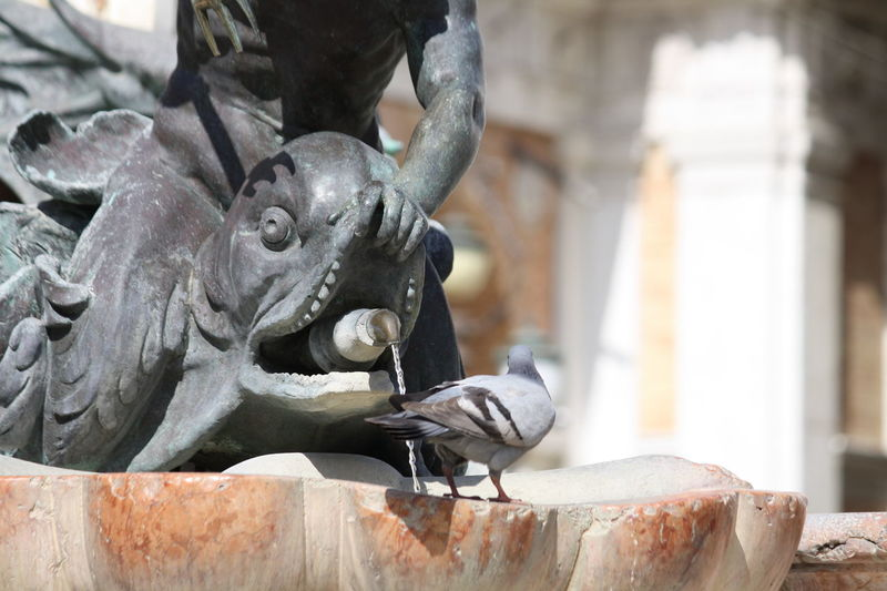 Art Close-up Craft Day Deterioration Focus On Foreground Fountain Italia Italy Loreto Marche No People Old Part Of Pigeon Selective Focus Water