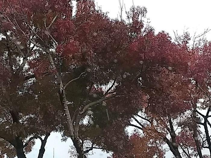 tree canopies