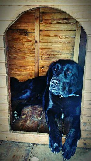 Mydog♡ Dark ımissyou;( Turkey Hello World Hi! Old Photo çoközledim Oğluşum :) Mugla