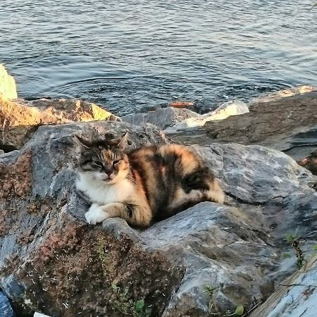 İstanbul kedileri
