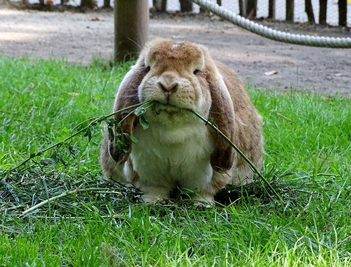 Rabbit Rabbit 🐇 Bunny 🐰 Bunny  Animal Themes Animals Animal Animal Photography Animal_collection Beauty In Nature EyeEm Best Shots