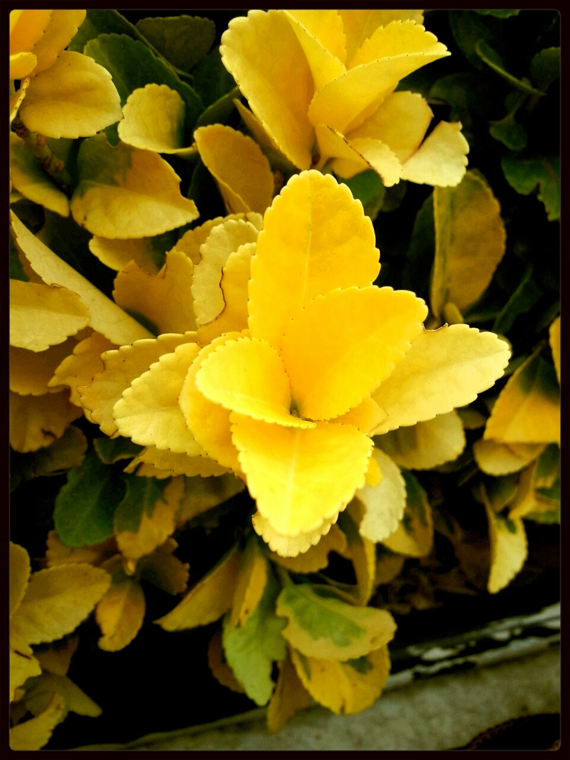 flower, yellow, petal, freshness, fragility, flower head, growth, transfer print, beauty in nature, close-up, nature, blooming, plant, leaf, auto post production filter, focus on foreground, in bloom, vibrant color, blossom, single flower