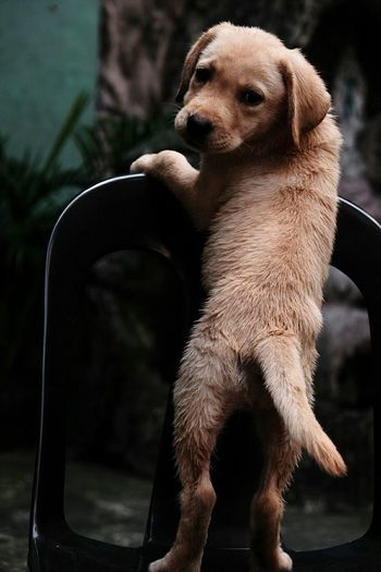 Close-up of puppy on chair