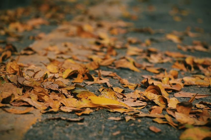 Autumn Leaf Change Dry Backgrounds Nature No People Close-up Outdoors Fallen Fragility Day Maple Leaf Beauty In Nature 🍂🍂🍂
