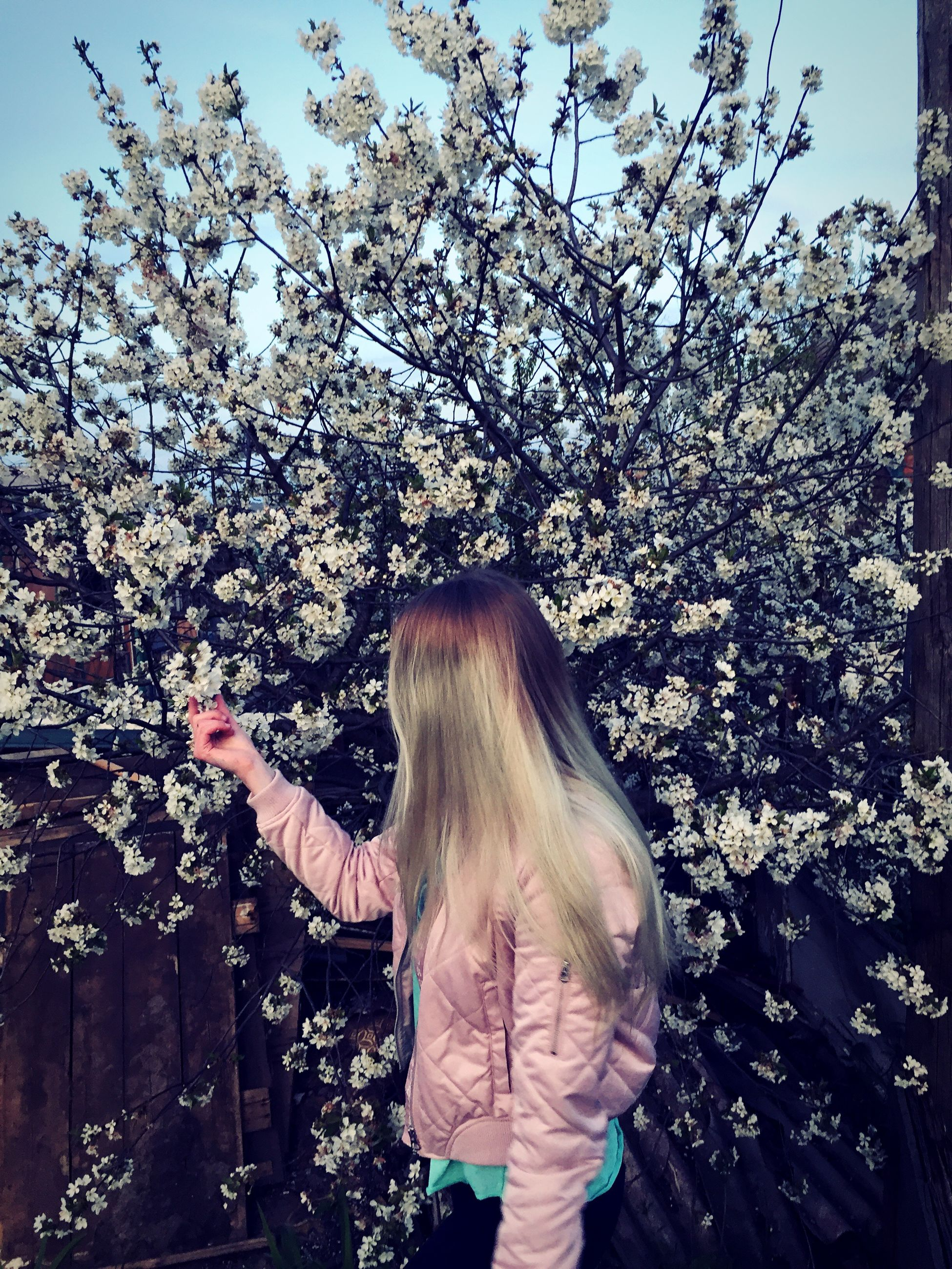 real people, one person, tree, rear view, long hair, flower, leisure activity, standing, blossom, outdoors, day, blond hair, women, nature, branch, young adult, people