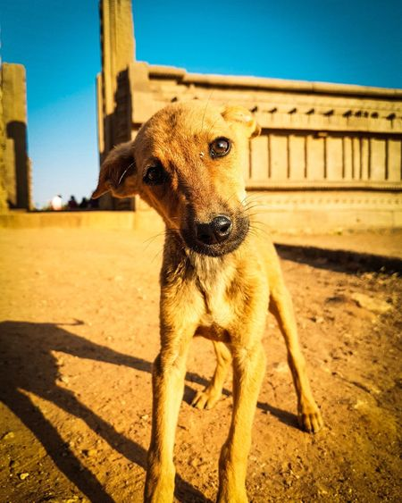 """It is very easy to love your loved ones but to share your love with the ones who need it is what makes you a good human being. So keep loving."" Of course by me😉 Found this little one while roaming around in Mamallapuram as his curious eyes were scanning my lens.🐶🐕 Historic Monument Indianhistory Puppy Love Curious One Animal Sand Mammal Animal Outdoors Animal Themes Day Dog Sky No People"