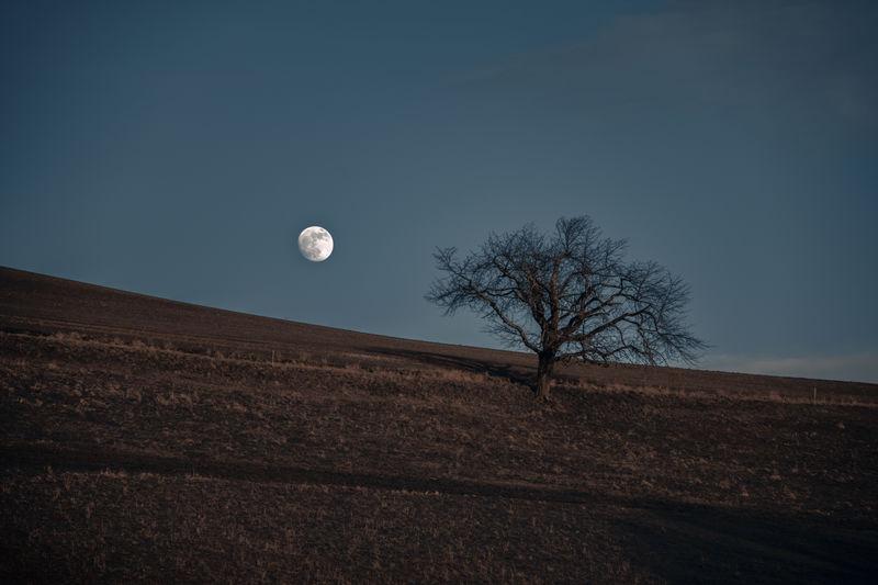 Moon Tree Landscape Field Bare Tree Nature Full Moon Night Dusk Planetary Moon Outdoors