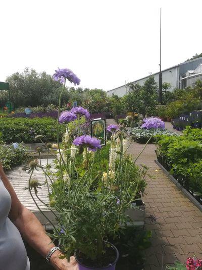 Paars Bloem Purple Flower Purple Water Sky