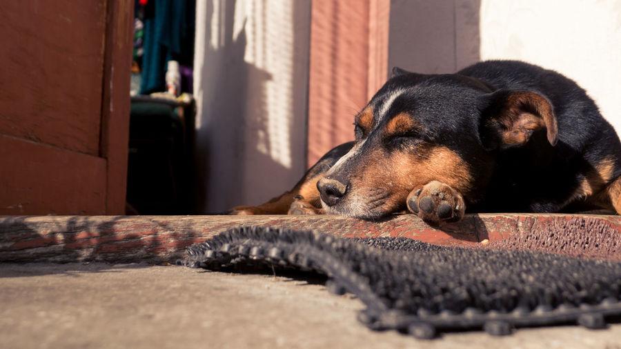 Dog Dog Love