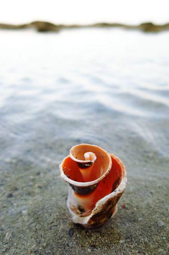 Dead Shell Sea Shells Seacreatures Spiral Shell Taking Photos Ocean Eyeem Collection EyeEm Filter EyeEm Vision