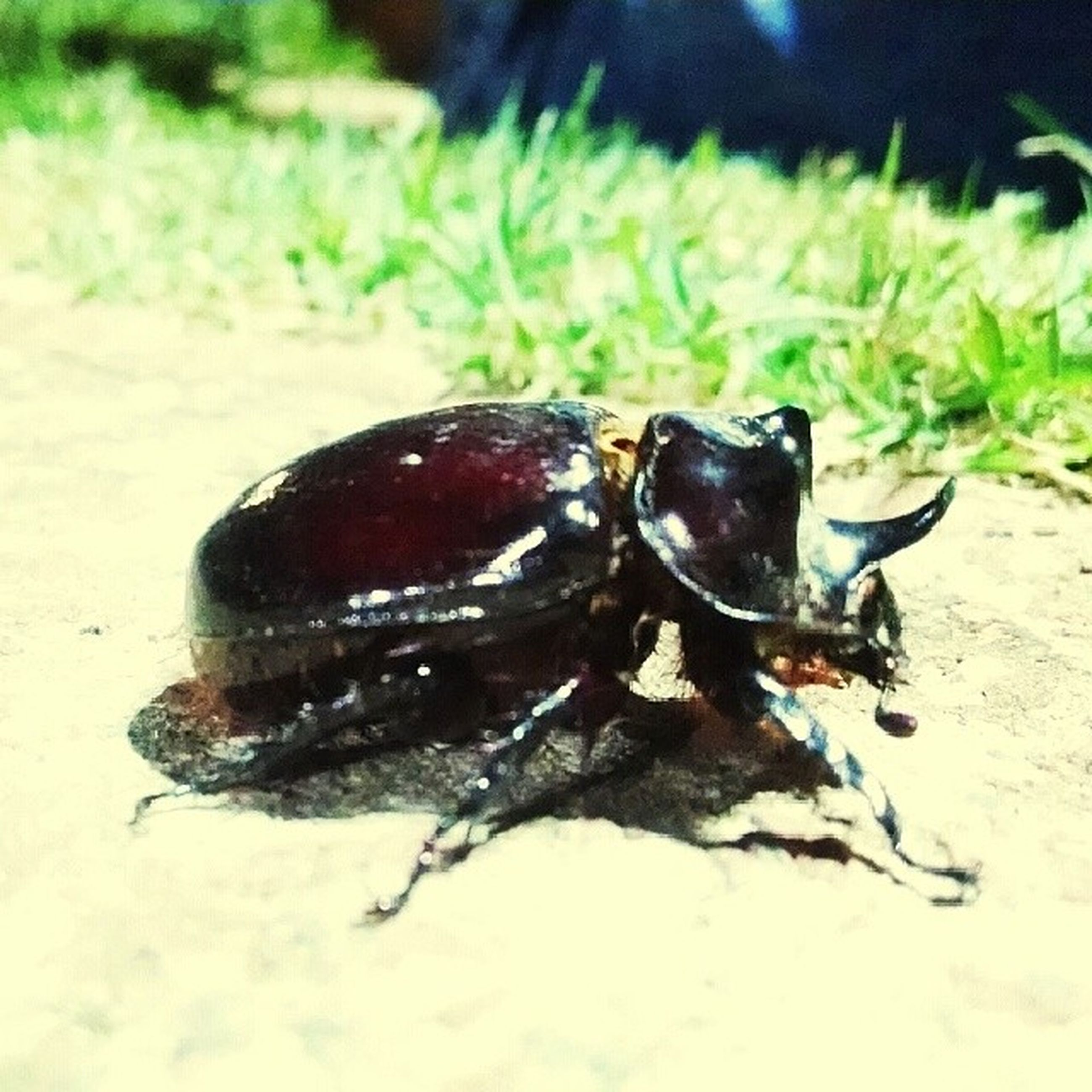 animal themes, one animal, animals in the wild, wildlife, insect, close-up, focus on foreground, full length, zoology, selective focus, nature, ground, animal antenna, day, outdoors, no people, animal, two animals, black color, dead animal