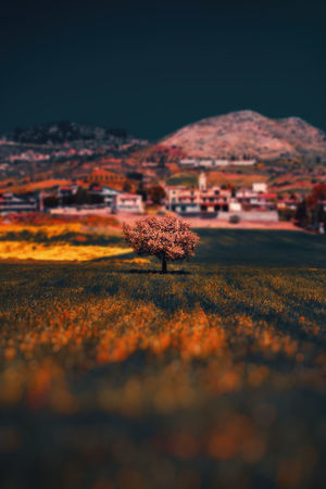 Tree Trees Architecture Autumn Beauty In Nature Building Exterior Built Structure Change Environment Field Land Landscape Mountain Nature No People Orange Color Outdoors Plant Scenics - Nature Selective Focus Sky Tranquil Scene Tranquility