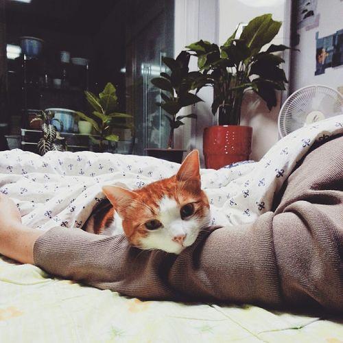 Catstagram Cat