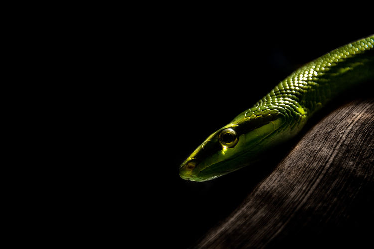 Close-up of green snake on tree at night