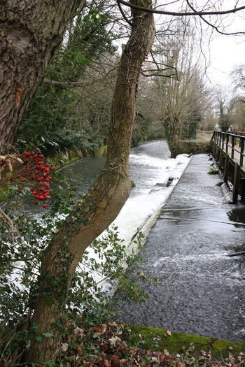Beauty In Nature Branch Bridge Day Flower Flowers Nature No People Outdoors River Scenics Stream Surrey Countryside Tranquility Tree Tree Trunk Weir Weird Winter