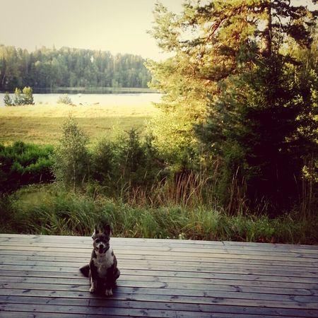 Sweden Min Hund