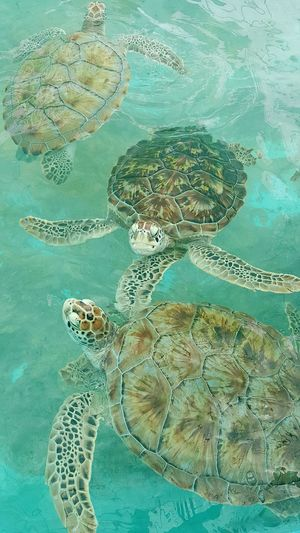 Home sweet home Slow Down Home Mindful Seaturtles Age Gracefully Go With The Flow Loggerheads Current Natural Beauty Wisdom Shell Home Sweet Home At Ease Purposefully Savor Every Moment Happy Travel Beach Turtle Turtleshell Caribbean Mexico Check This Out Hello World