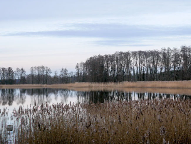 Brandenburg NearBerlin See Sea Lake Beauty In Nature Scenery Grass No People Day Outdoors Nature Agriculture Spring Tranquility Swimming Nature Ruhe Ruhig Rural Scene Sky Abend Evening Time Evening