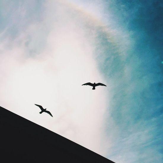 Birds Sky Blue Sky Vscocam Streetphotography Street Photography