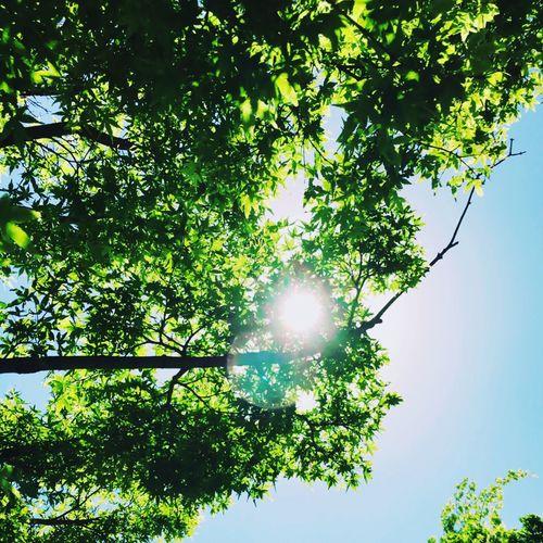 Earysummer Green Color Green Green Green!  Green Leaves Relaxing EyeEm Nature Lover EyeEm Best Shots