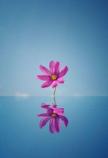 Pink flower against blue sky over sea
