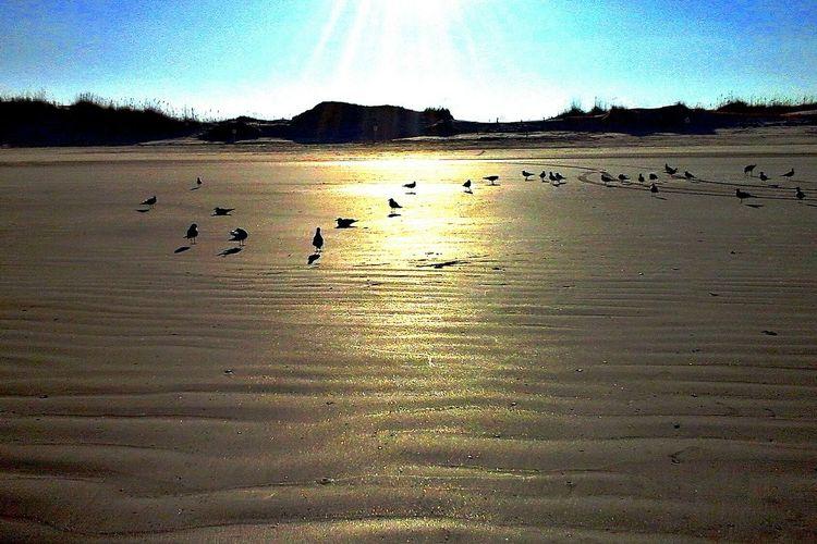 Life Is A Beach Sunset Beach Ocean Bird Beach Photography Landscapes With WhiteWall Seagull