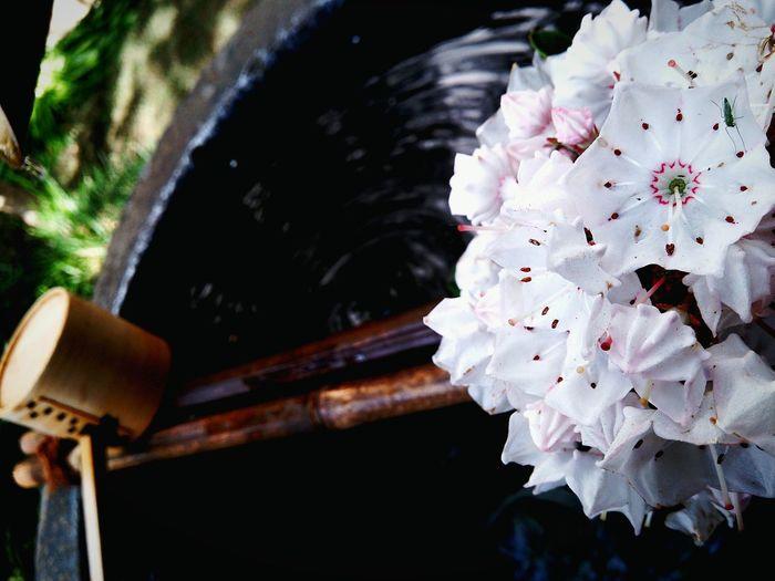 洒落たもてなし Smart hospitality. Japanese<O・MO・TE・NA・SHI> Kalmia Flowers Hello World Tokyo,Japan Japanese Traditional カルミア Japanese Temple