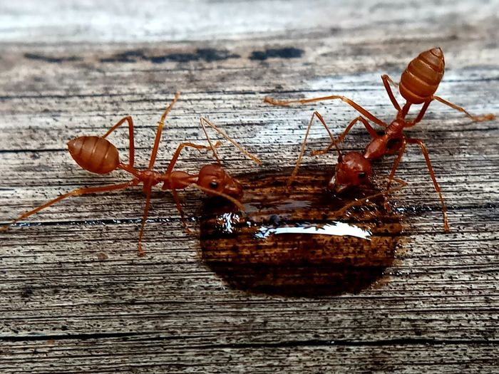 Ants Background Close-up Day Insect Outdoors Selective Focus Wood - Material