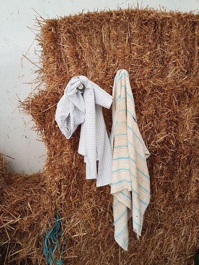Close-up of clothes drying on hay