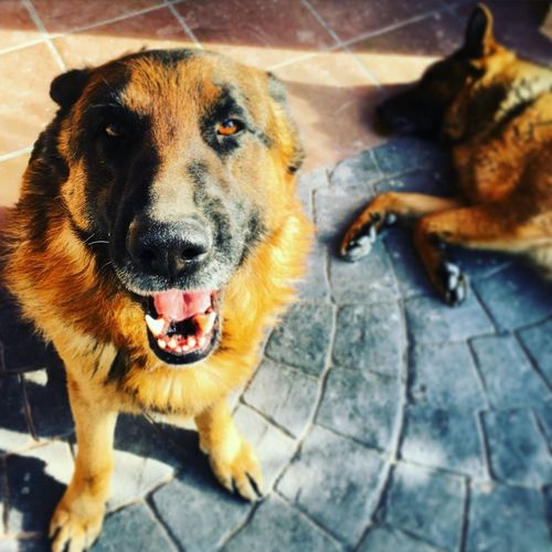 Close-up portrait of dog on footpath