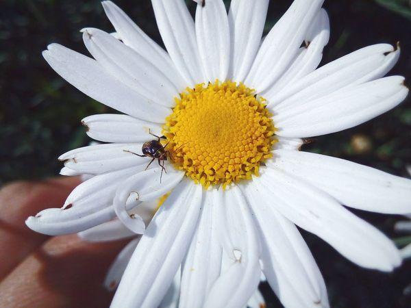 First Eyeem Photo Flower Insect EyeEm Desenfoque