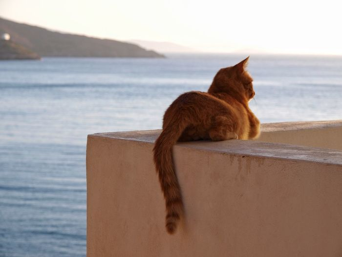Cat waiting for the fishermen to come home Cat Tiger Fishermen Ocean Ocean View Greece Island Pet Hunter Sea Beach Water Animal Dog Sand One Animal Pets No People Mammal Nature Horizon Over Water Animal Themes Outdoors Visual Creativity