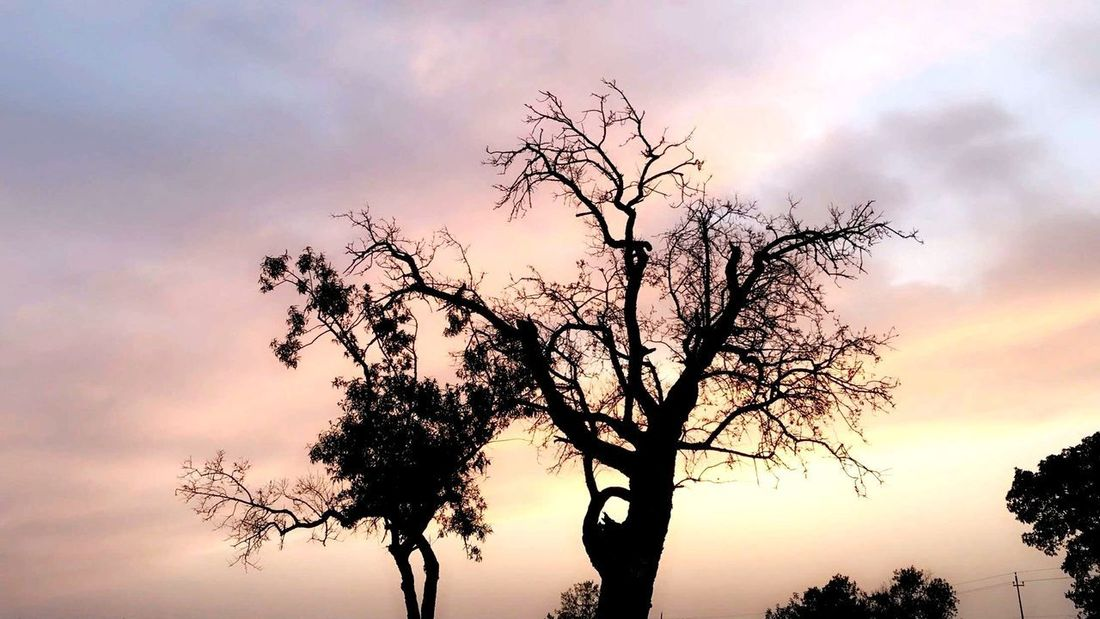 Tree Sky Sunset Plant Beauty In Nature Silhouette Cloud - Sky Tranquility Branch Scenics - Nature Low Angle View Orange Color Tranquil Scene Nature Growth Non-urban Scene No People Idyllic Outdoors Dramatic Sky