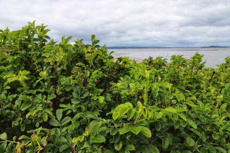 Lush green bush
