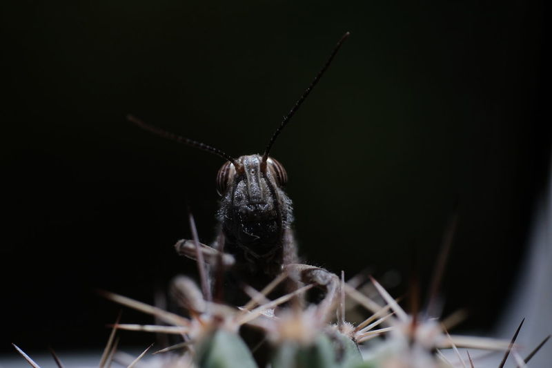 Black Background Insect Spider Close-up Arachnid Arthropod Animal Antenna Ant Grasshopper Butterfly - Insect Animal Wing Snail Housefly