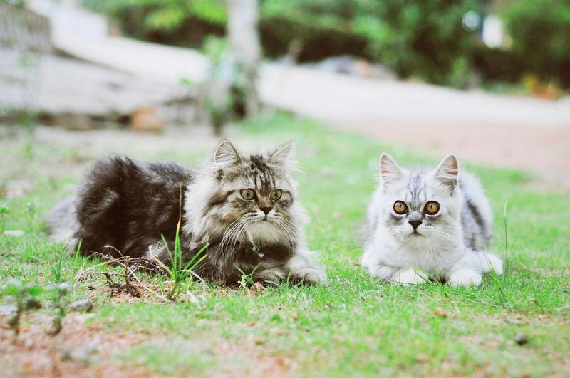 Portrait of cats on field