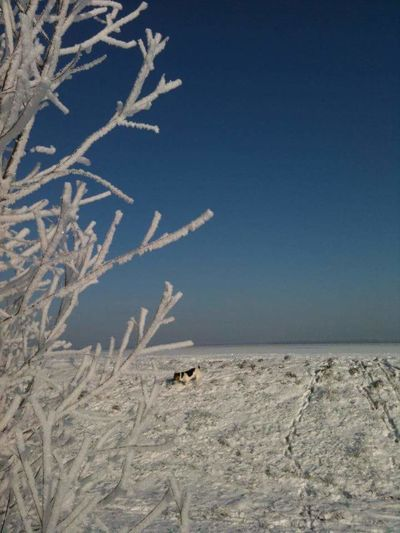 No People Snow Winter Cold Temperature Beauty In Nature Outdoors Beauty In Nature Lake Frozen Animal Themes Sun Winter Clear Sky Nature Dog Walking Dog Photography Jackrussellterrier
