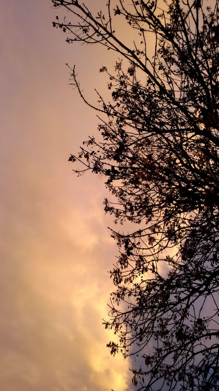 tree, nature, sunset, sky, low angle view, beauty in nature, silhouette, no people, branch, dusk, outdoors, growth, tranquility, scenics, day