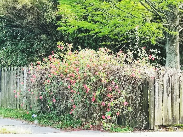 Blooming fence