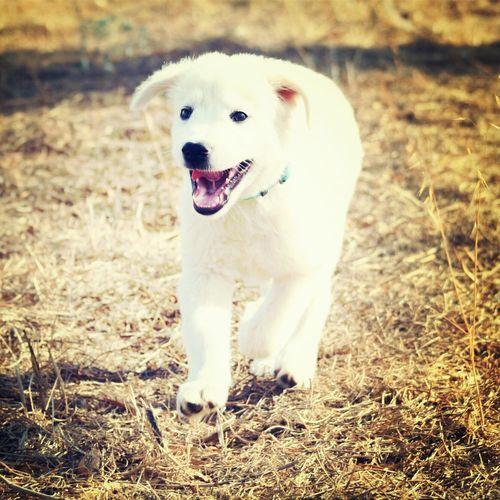 Edward Dog Pastoremaremmano First Eyeem Photo